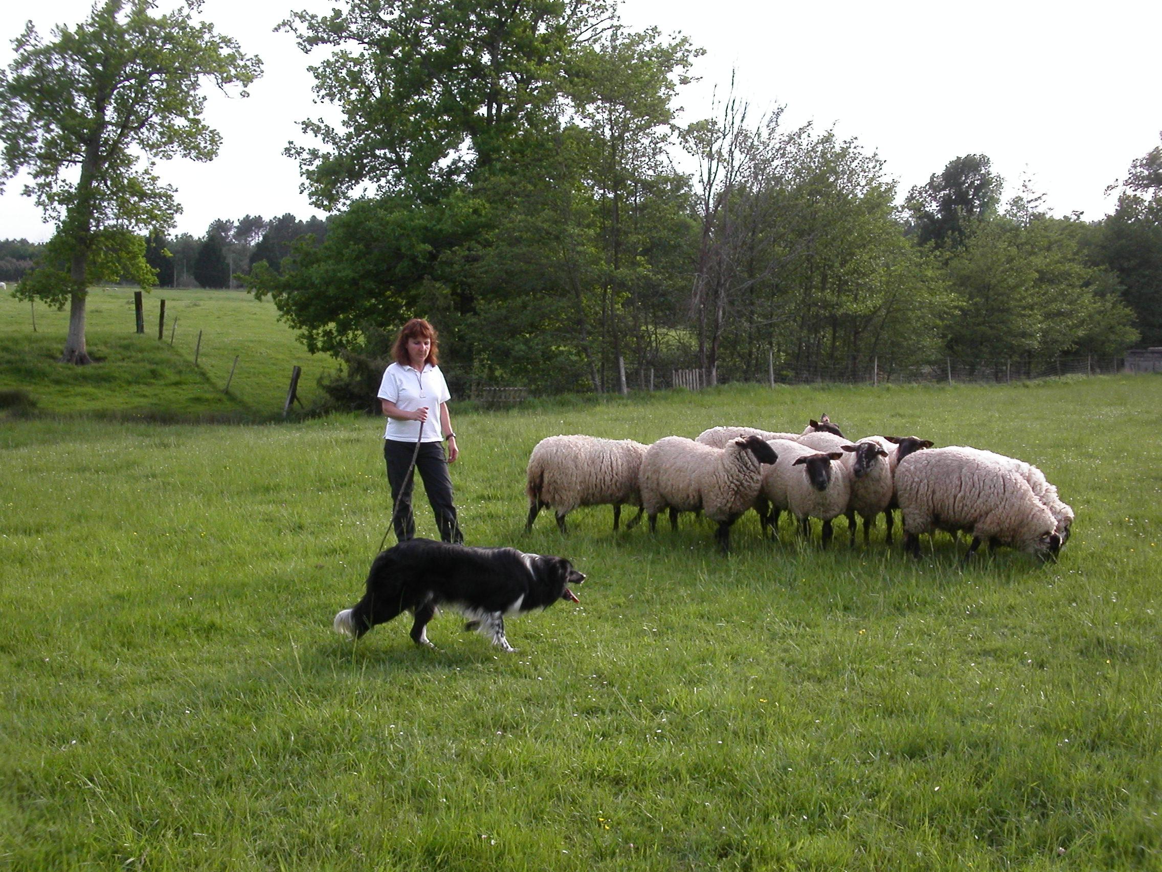 L'équipe - Mon métier canin - Formation éducateur canin en